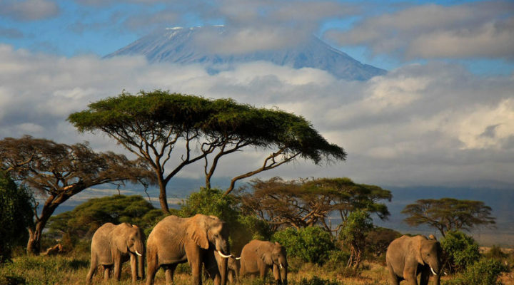 John Hoffmire: Turning Kenyan safaris into economic development hubs